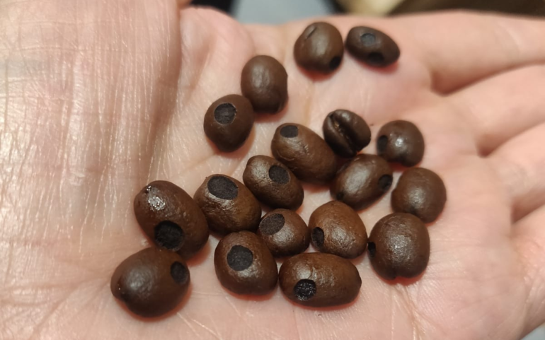 coffee beans with holes